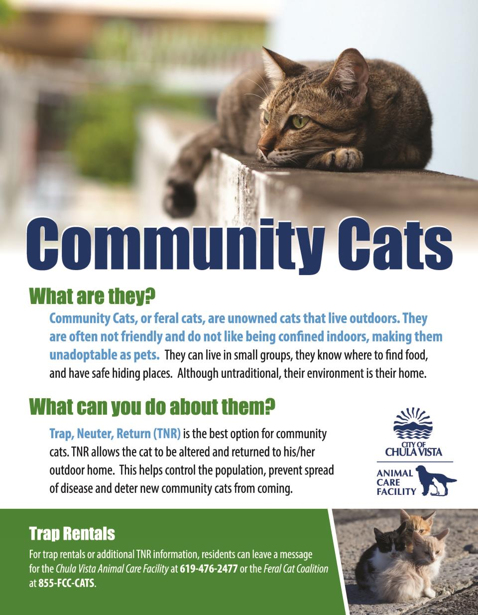 Community Cat Information